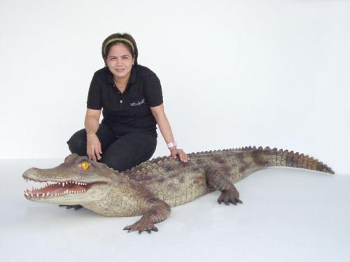 alligator2025