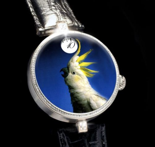 angular-momentum-cockatoo-3-tg-watch