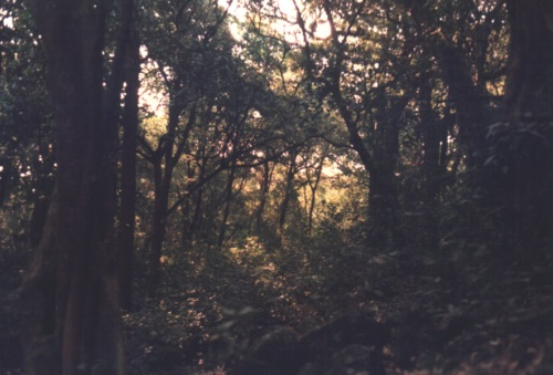 Navegaon_forest