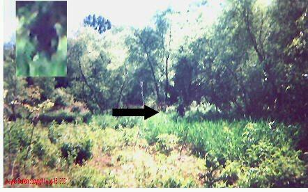 wayneburton_bigfoot_swamp_arrow