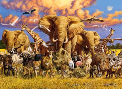 wildlife1000clem