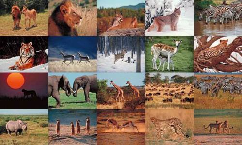wildlife_photo_screensaver_29076