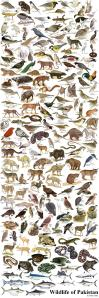 wildlifeofpakistanrm0